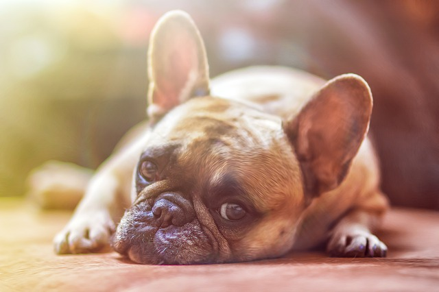 איך להכיר בין גור כלבים חדש לחתול הוותיק בבית