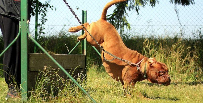 5 טיפים משמעותיים לאילוף כלבים